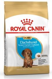 Royal Canin BHN Dachshund Puppy 1.5kg