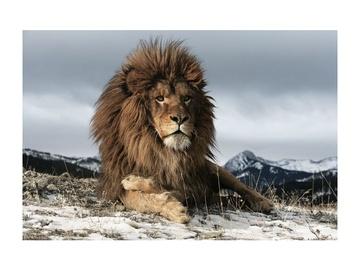 Signal Meble Lion Glass Painting 120x80cm