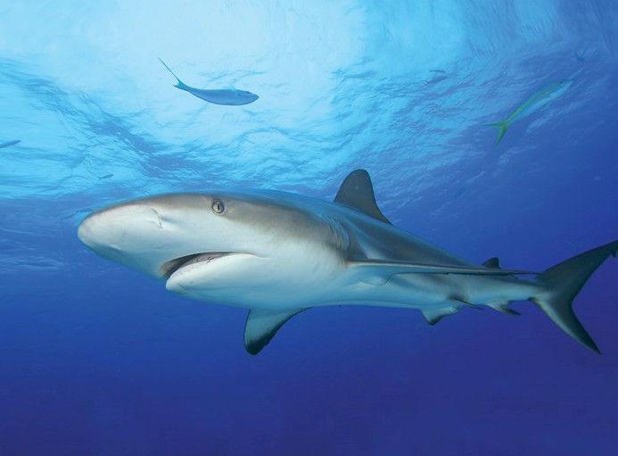 Tetra DecoArt Poster Shark & Coral