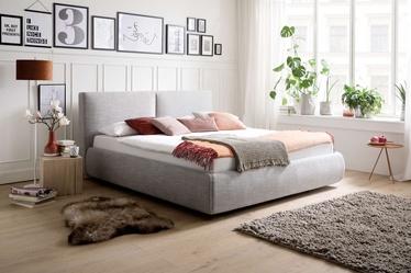 Lova Meise Möbel Atesio, pilka, 225x199 cm