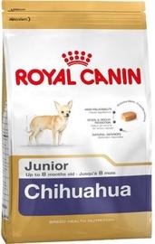 Royal Canin SHN Chihuahua Junior 500g