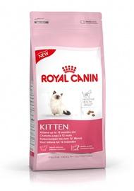 Barība kaķēniem Royal Canin, 36, 2kg