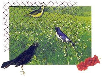 Apsauginis tinklas nuo paukščių, plastikinis, žalias, 4 x 5 m
