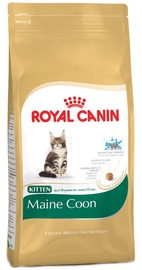 Royal Canin FBN Kitten Maine Coon 2kg