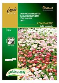 Ilggadīgo mārpuķīšu sēklas Pomponette