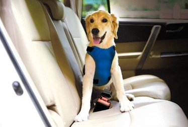 Record Car Safety Strap For Dog L