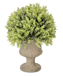 Home4you Buxus Green Plant In Pot H35cm Green