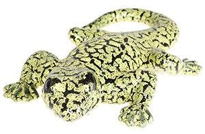 Verners HG4032 Lizard