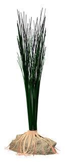 Tetra DecoArt Hairgrass L