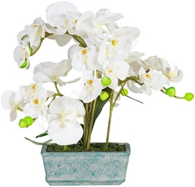 Home4you White Orchid Knotted 5 H36cm