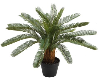 Home4you Rubber Cycas Plant 70cm
