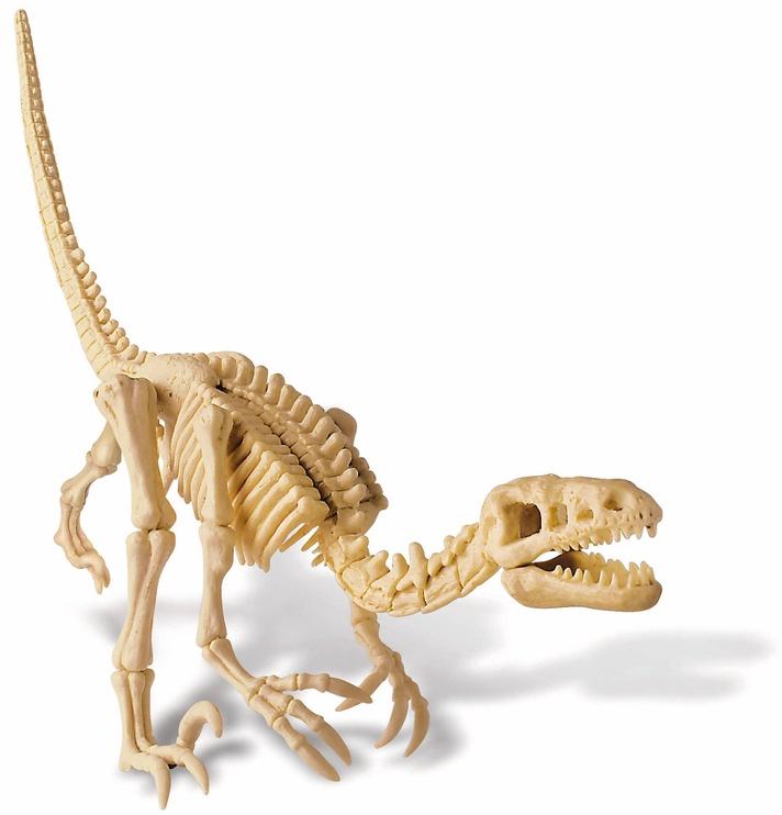4M Dig A Dino Skeleton Velociraptor 13234
