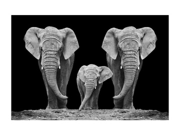 Signal Meble Elephant Family Glass Painting 120x80cm
