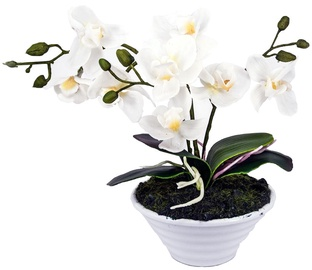 Home4you White Orchid 3 knotted H30cm