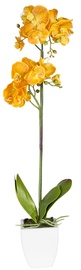 Home4you Orchid 1 Double Knotted Yellow H75cm