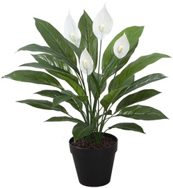 Home4you Artificial Green Plant Spathe H60cm