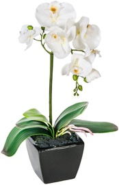 White Orchid 1 Knotted H42cm