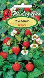 Daržo sėklos Barškės Tresca