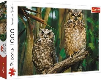 Puzle Trefl Premium Quality Owls 736034, 1000 gab.