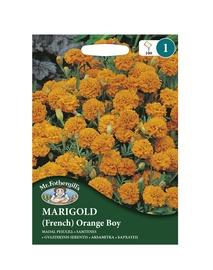 SAMTENES (franču) Orange Boy