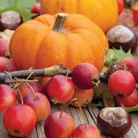 Paw Decor Collection Autumn Pumpkin Napkins 33x33cm