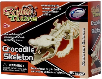 Eastcolight Crocodile Skeleton 28008/28202