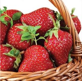 Paw Decor Collection Strawberry Basket 33x33cm