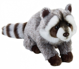 Dante National Geographic Raccoon 24cm