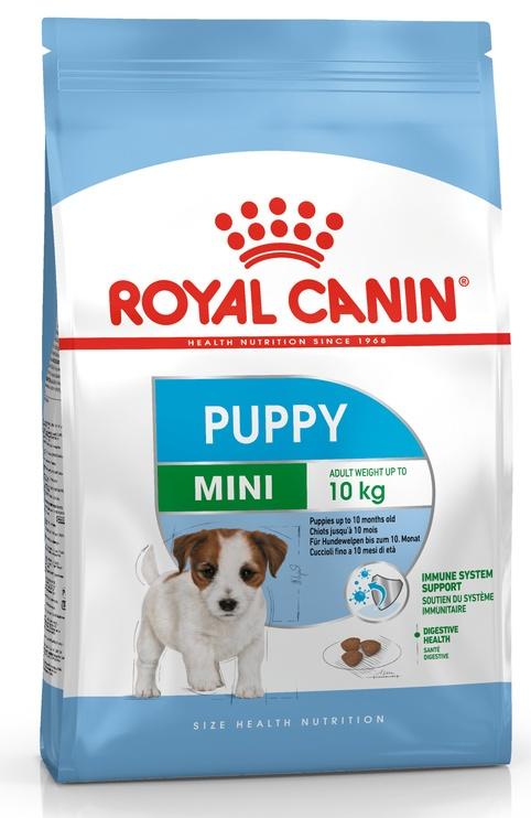 Sausas ėdalas šunims Royal Canin Mini Puppy, 800 gr