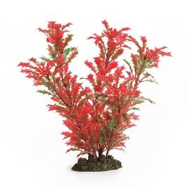 Akvariumo augalas Beeztees, 3,5 x 11,5 x 25,5 cm