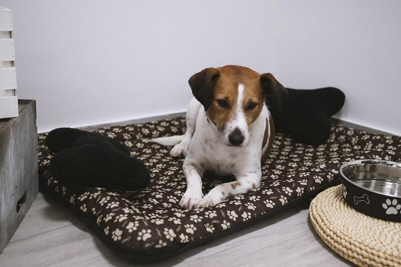 Кровать для животных Myanimaly Happy L, коричневый, 1000x700 мм