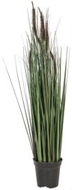 Home4you Bouquet Herbarium Grass In Garden H70cm Brown 83834