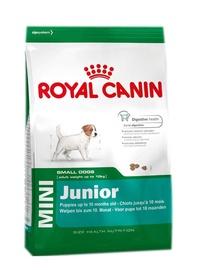 Sausas ėdalas šunims Royal Canin Mini Junior, 800 gr
