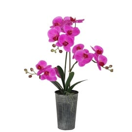 Home4you In Garden Purple Orchid w/ Pot H63cm