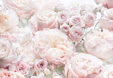 TAPEET FOTO 8-976 368x254CM SPRING ROSES