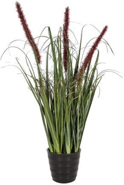 Home4you Bouquet Herbarium With Pot In Garden H55cm Brown 83829