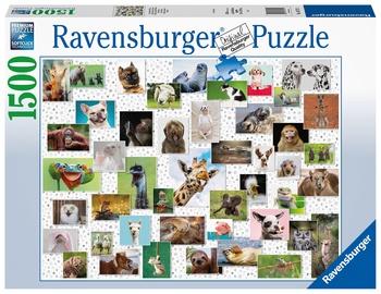 Ravensburger Puzzle Funny Animals Collage 1500pcs 167111