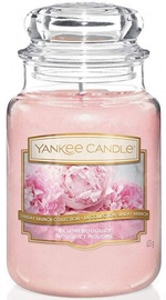 Yankee Candle Blush Bouquet 623g