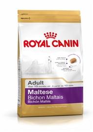 "ŠUNŲ ĖDALAS ""MALTESE ADULT"" (500 g) (ROYAL CANIN)"