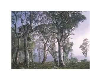 Fototapeet 8-523 Fantasy Forest 368x254cm
