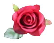 Dirbtinė rožė SJ-B49SG