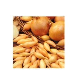 SVOGŪNŲ SODINUKAI SUTRON (0,5 kg)