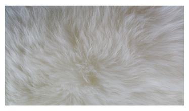 Vaip Futura 125x65 cm, valge, lambanahk