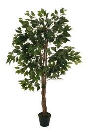 Dirbtinis augalas fikusas vazone, 150 cm aukščio
