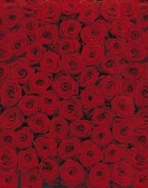 Fototapeet 4-077 Roses 194×270cm