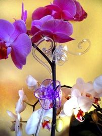 Orhideeklamber, valge, 1tk