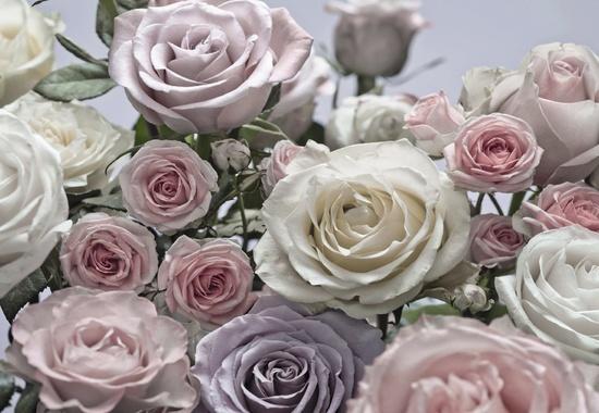 Fototapete Komar Floraison 8-736, 368x254cm