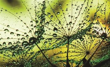 Fototapete ar zaļiem augiem, 2.54x1.84 m