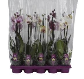 Orhidee Mix, 2-vart, P12