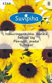 Seemned päevalill Sunspot, madal, 2g